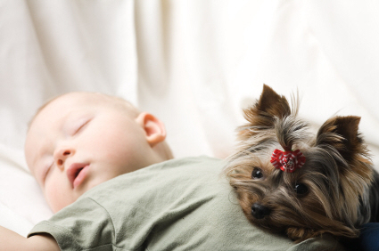 dogs and babies 2
